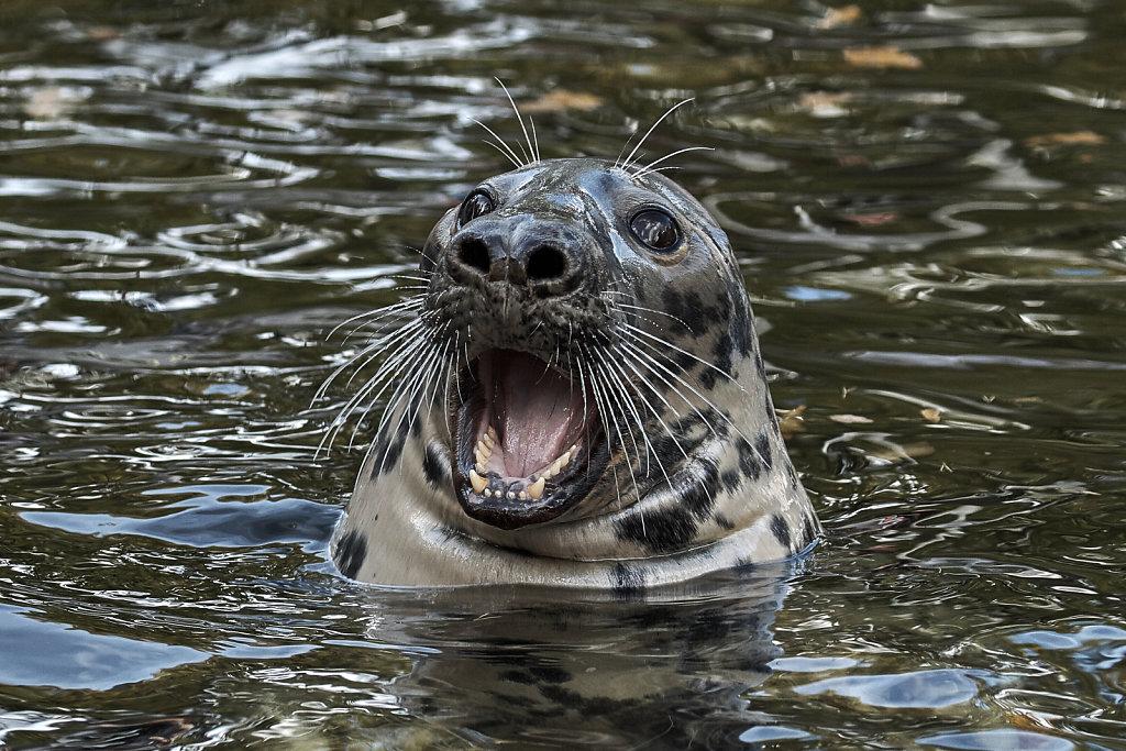 Surprised Seal
